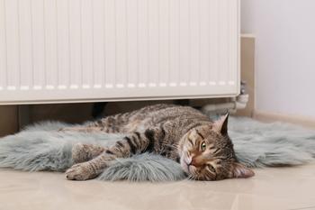 radiateur et chat