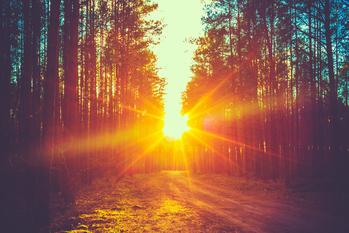 Coucher de soleil entre le arbres d'une forêt